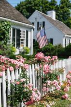 Summer Roses On White Picket Fence In Massachusetts