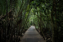 Boardwalk At Pulau Ubin, Singapore