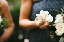 Close Up Of Girl Holding Rose Petals In Her Hand