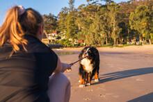 Playing Tug Of War With A Dog
