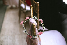 Flower Crown With Pink And White Roses Hanging On A Golden Empty