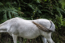 Headless Grey Horse In Front Of Greenery