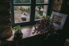 Horse Through The Window
