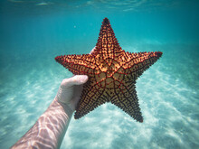 Hand Of Snorkeler Holding Starfish Underwater. Concept Of Travel And Adventures