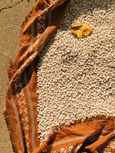 White Beans Drying On The Ground.