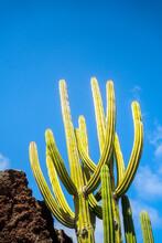 Cactus Next To A Rock.