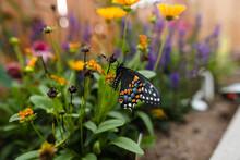 Swallowtail Butterfly In Garden