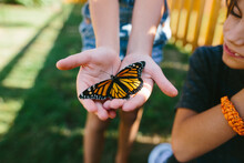 Monarch Butterfly In Child's Hands