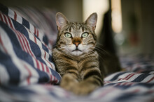 Tiger Cat On Bed
