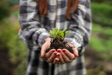 Senior Woman With Hat Holding A Sprout Of Fresh Seedlings To Plant In The Garden