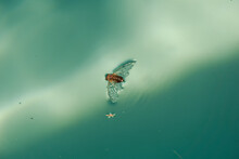 Bug Floating In Water