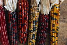 Dried Corn Stalks