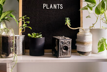Book Shelf With Plants
