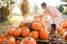 Young Girl With Braids Bends Down To Pick Up Pumpkin At Farm Stand