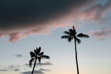 Two Palm Trees Over Blue Sky And Pink Clouds