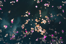 Abstract Withered Rose Petals On The Water