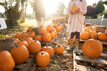Faceless Girl In Rainbow Boots Holds Pumpkins In Evening Light
