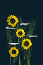 A Fish On Dark Background With Sunflowers