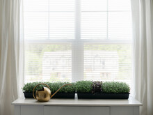 Home Grown Microgreens