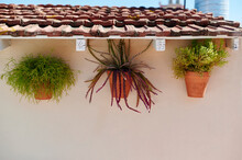 Plants Hanging On A Wall Outside