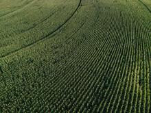 Aerial Cornfields Fields