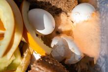 Bio Waste Dissolving