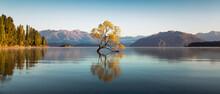 The Wanaka Tree At Dawn.