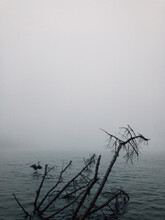 Great Blue Heron And Lake In Morning Mist