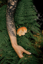 Closeup View Of A Fern Tatto On Woman Arm In Forest Next To Real Fern And Mushroom