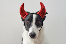 Dog Wearing Red Devil's Horns As A Halloween Costume.