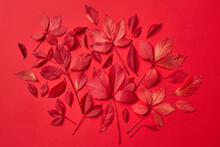 Natural Fallen Autumn Leaves Collage Of Red Color.