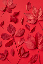 Red Autumn Natural Leaves Pattern.