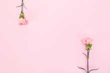 Top View Of Two Carnation Flowers On Pink Background With Space For Text In The Middle