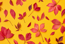 Decorative Collage From Fallen Colorful Leaves.