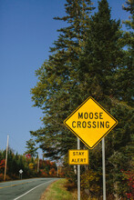 Moose Crossing Sign In New Hampshire