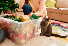 Curious Cat Wants To Play With Christmas Ornaments