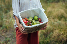 A Woman Holding A Basket With Apples