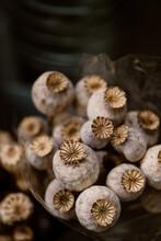 Dried Poppy Flowers
