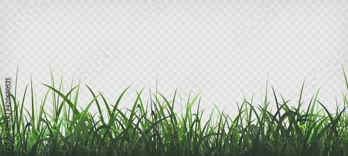 Fotografia Green grass template. Seamless pattern
