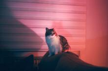 Cat In The Sofa