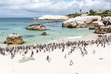 Boulders Beach In Cape Town With The Penguins.