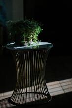 Sunlit Houseplant