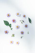 Still Life Of Potato Flowers On White Background