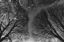 Reflecion Of Trees.