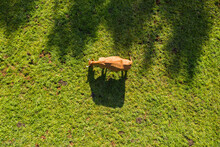 Aerial Shot Of Bovine On Green Pasture