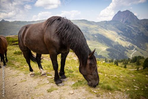 Fotografia, Obraz horse eating in the alps