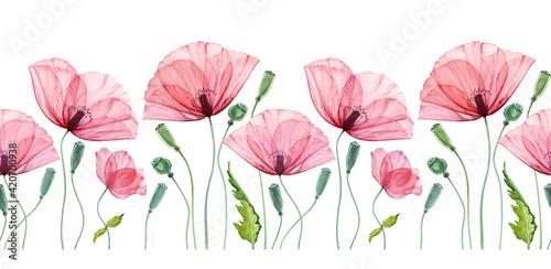 Fototapeta Watercolor seamless border with Poppy