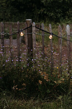 Wooden Fence With String Lights And Purple Flowers