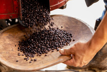 Coffee Beans In Tray Coming Out Of Roasting Machine