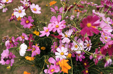 Close-up Of Wild Wild Flowers During The Journey